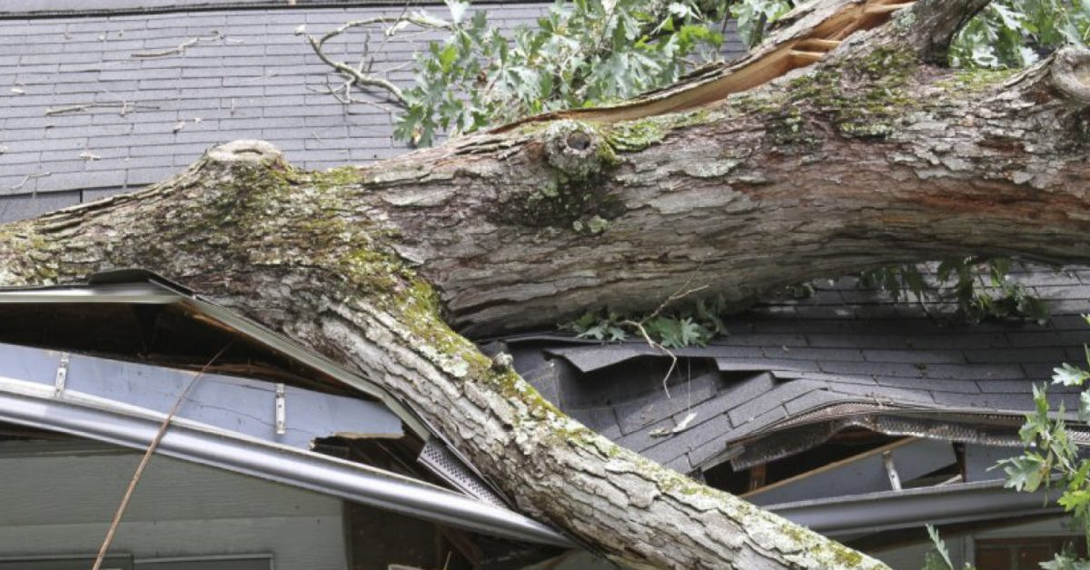 Tree that has fallen on top of a house.